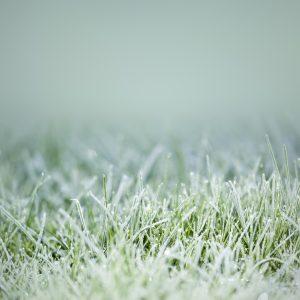 winterize-lawn