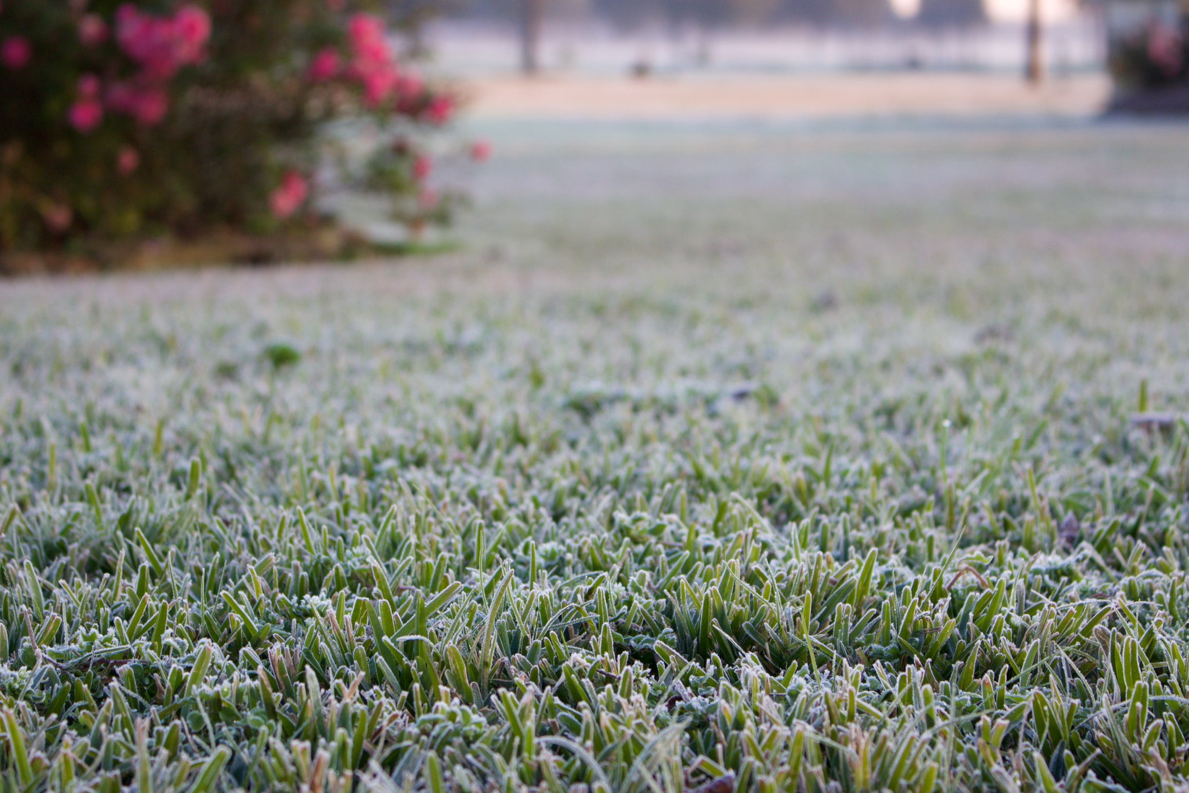 Winter Is Coming!  Prepare Your Lawn & Garden Now.