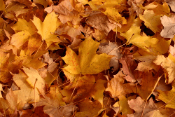 Fall Leaf Clean Up MN