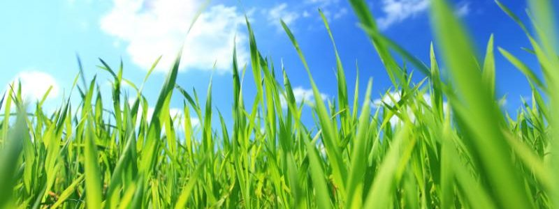 5 Tips for Summer Lawn Care in Minnesota