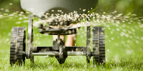 4 Reasons to Overseed Your Lawn This Fall