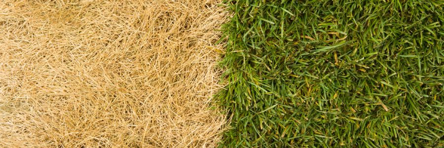 5 Most Common Lawn Care Mistakes