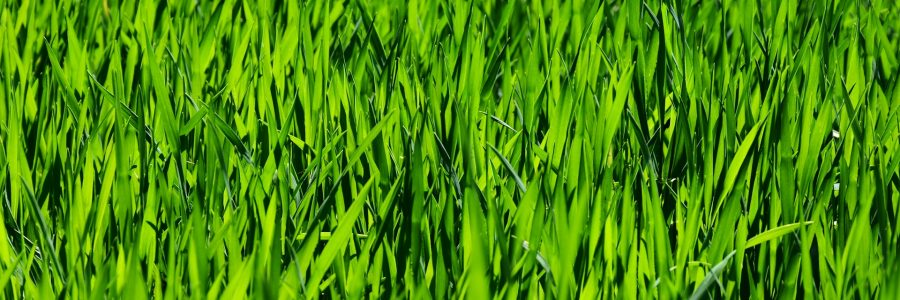 A Couple Of Summer Lawn Care Tips That Will Make Your Lawn Be Envied By The Neighborhood