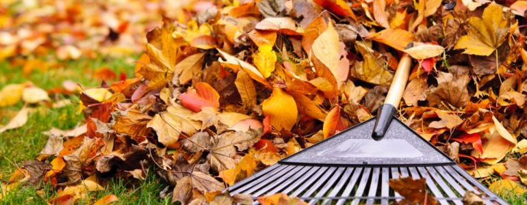 Fall Lawn Care Tips For A Healthier Lawn Next Spring