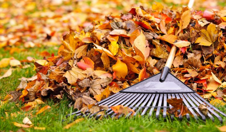 Fall Cleanup Season 2019 Is Approaching