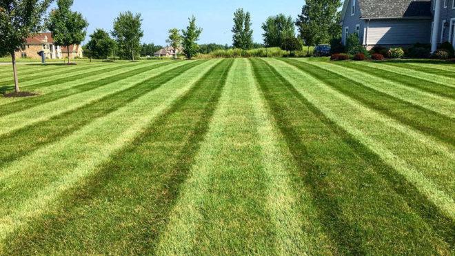 Healthy Summer Lawn